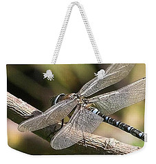 Aeshna Juncea - Common Hawker Taken At Weekender Tote Bag