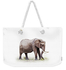 African Elephant Grazing - Isolated On White Weekender Tote Bag