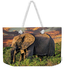 African Elephants At Sunset Weekender Tote Bag by Lynn Bolt
