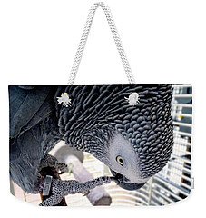African Grey Parrot Weekender Tote Bag by Melissa Messick
