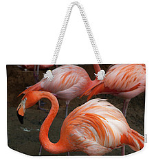 African Lesser Flamingos, Ft. Worth Zoo Weekender Tote Bag