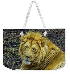 African Lion Close-up Weekender Tote Bag