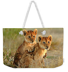 African Lion Cubs Weekender Tote Bag