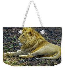 African Lion Resting Weekender Tote Bag