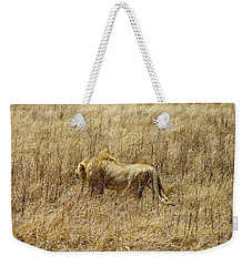 African Lion Stalking Weekender Tote Bag