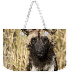 Weekender Tote Bag featuring the photograph African Wild Dog Okavango Delta Botswana by Suzi Eszterhas