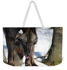 Alaskan Tundra Wolf Weekender Tote Bag