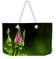 Weekender Tote Bag featuring the photograph Alberta Rose Buds by Darcy Michaelchuk