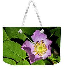 Weekender Tote Bag featuring the photograph Alberta Wild Rose Opens For Early Sun by Darcy Michaelchuk