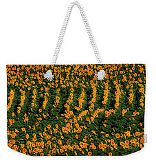 Weekender Tote Bag featuring the photograph All In A Row by Chris Berry