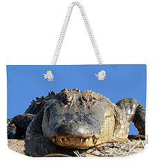 Weekender Tote Bag featuring the photograph Alligator Approach .png by Al Powell Photography USA
