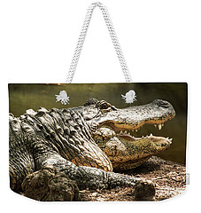 Weekender Tote Bag featuring the photograph Alligator At Lowry Park Zoo by Richard Goldman