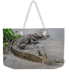 Alligators Courting Weekender Tote Bag