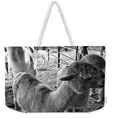 Alpaca Meeting  Weekender Tote Bag