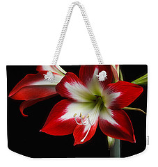 Weekender Tote Bag featuring the photograph Amaryllis 'quito' by Ann Jacobson