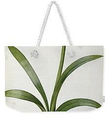 Amaryllis Vittata Weekender Tote Bag by Pierre Redoute