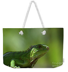 Amazing Look At A Common Iguana Weekender Tote Bag by DejaVu Designs
