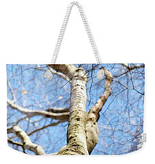 Weekender Tote Bag featuring the photograph American Beech Tree by Christina Rollo