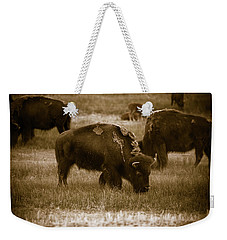 American Bison Grazing - Bw Weekender Tote Bag