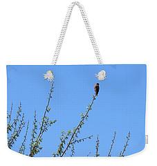American Kestrel Atop Pecan Tree Weekender Tote Bag