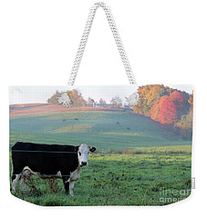 Amish Cow Early Morning  5788 Weekender Tote Bag