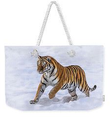 Weekender Tote Bag featuring the photograph Amur Tiger Running In Snow by Rikk Flohr