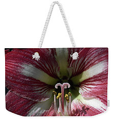 Weekender Tote Bag featuring the photograph Amaryllis Flower Close-up by Sally Weigand