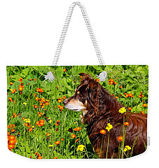 Weekender Tote Bag featuring the photograph An Aussie's Thoughtful Moment by Debbie Oppermann