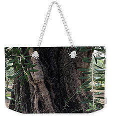 Ancient Old Olive Tree Spain Weekender Tote Bag by Colette V Hera Guggenheim