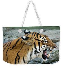 Angry Tiger Weekender Tote Bag by John Black