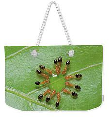 Ant Monomorium Intrudens Group Drinking Weekender Tote Bag by Takashi Shinkai