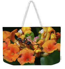 Weekender Tote Bag featuring the photograph Ant On Plant  by Richard Rizzo