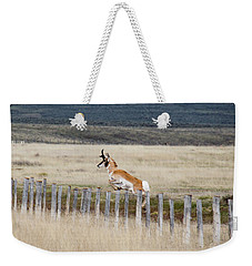 Weekender Tote Bag featuring the photograph Antelope Jumping Fence 1 by Rebecca Margraf