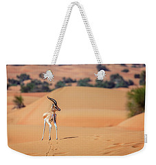 Weekender Tote Bag featuring the photograph Arabian Gazelle by Alexey Stiop