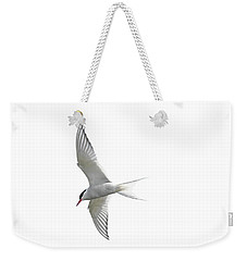 Arctic Tern Flying In Mist Weekender Tote Bag