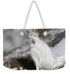Are You Kidding? - Mountain Hare #14 Weekender Tote Bag