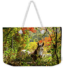 Weekender Tote Bag featuring the photograph Are You My Friend? by Jeff Folger