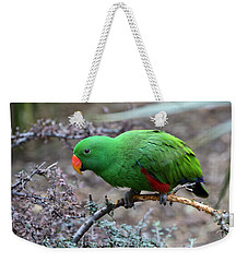 Green Male Eclectus Parrot Weekender Tote Bag