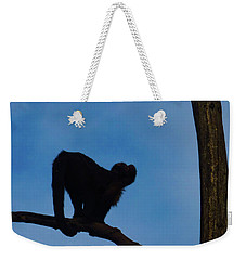 Weekender Tote Bag featuring the photograph Assessing The Jump by Steve Taylor