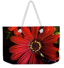 Aster Coming Out Of The Dark Weekender Tote Bag