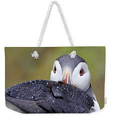 Atlantic Puffin With Rain Drops Weekender Tote Bag