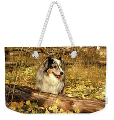 Austrailian Shepherd In Autumn Leaves Weekender Tote Bag