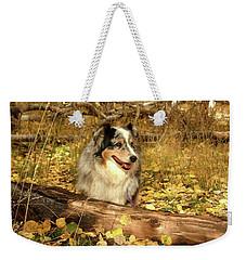 Austrailian Shepherd In Autumn Leaves Weekender Tote Bag