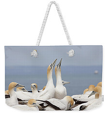 Australasian Gannets Courting Weekender Tote Bag