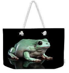Australian Green Tree Frog, Or Litoria Caerulea Isolated Black Background Weekender Tote Bag by Sergey Taran