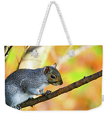 Weekender Tote Bag featuring the photograph Autumn Squirrel by Karol Livote