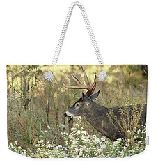 Autumn Whitetail In The Smokies Weekender Tote Bag