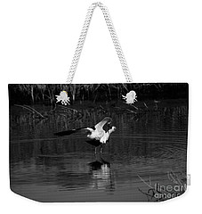 Weekender Tote Bag featuring the photograph Avocet Courtship Dance by John F Tsumas