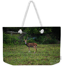 Axis Buck Kalaupapa, Molokai Weekender Tote Bag by Craig Wood