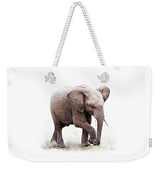 Baby African Elephant Isolated On White Weekender Tote Bag